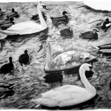 Birdmingel, 40 x 35 cm, litografi
