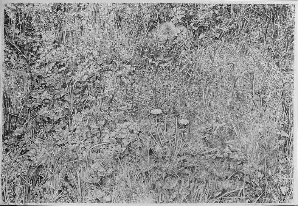 Markens gröda, 85 x 69 cm, litografi