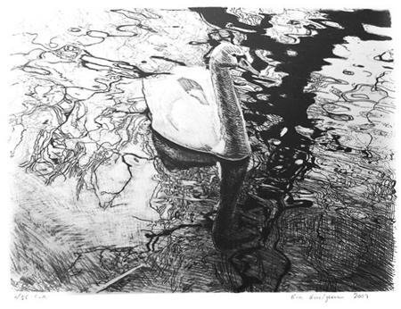 Svan, 60 x 50 cm, litografi