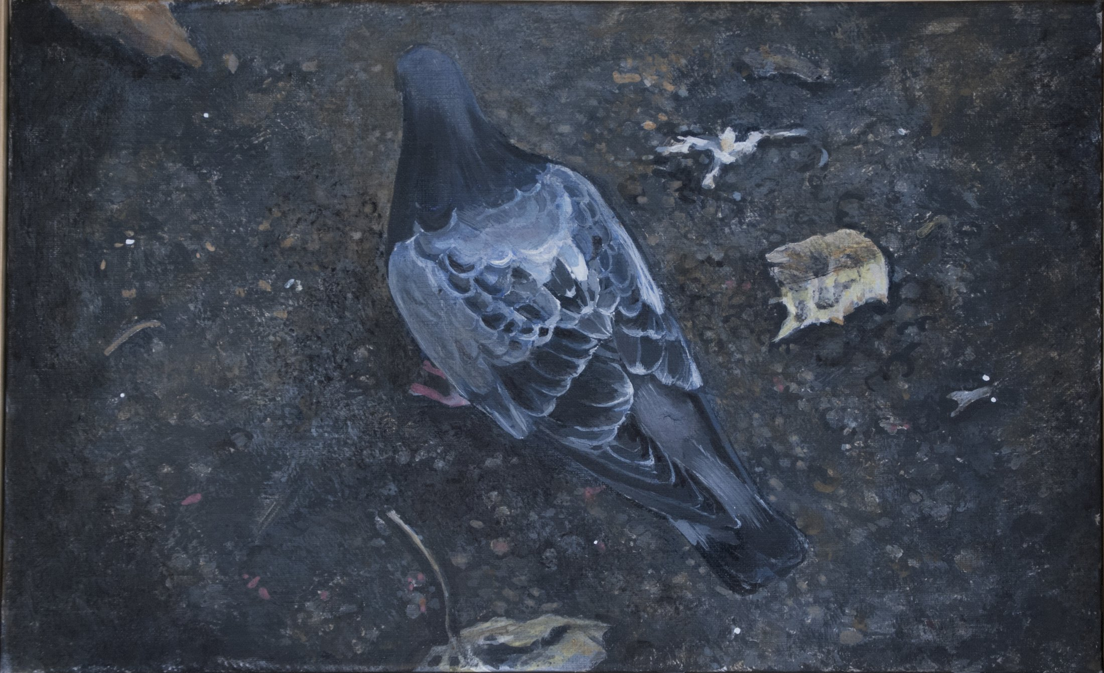 Duva på asfalt, äggoljetempera på duk, 39 x 25 cm